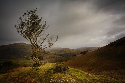 The Lonely Tree - lake District UK