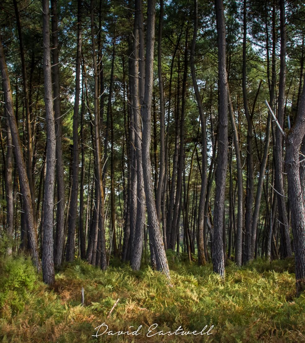 Dark Forest.jpg
