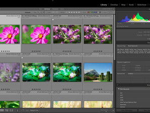 Want to Learn Adobe Lightroom Photo Editing Online?