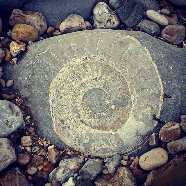 Ammonite on Monmouth Beach