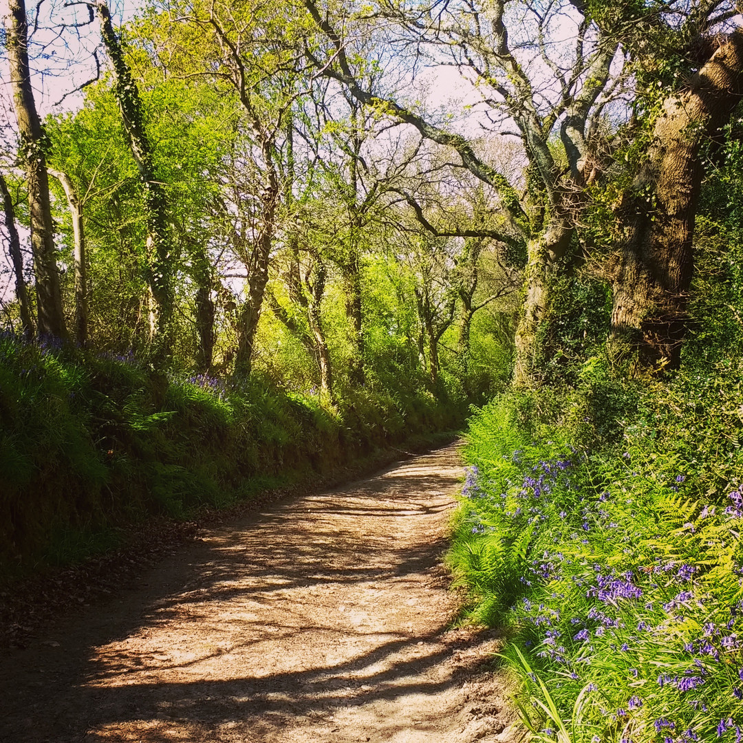 The bridle path into Axminster, a lovely 30 minute walk from the site.
