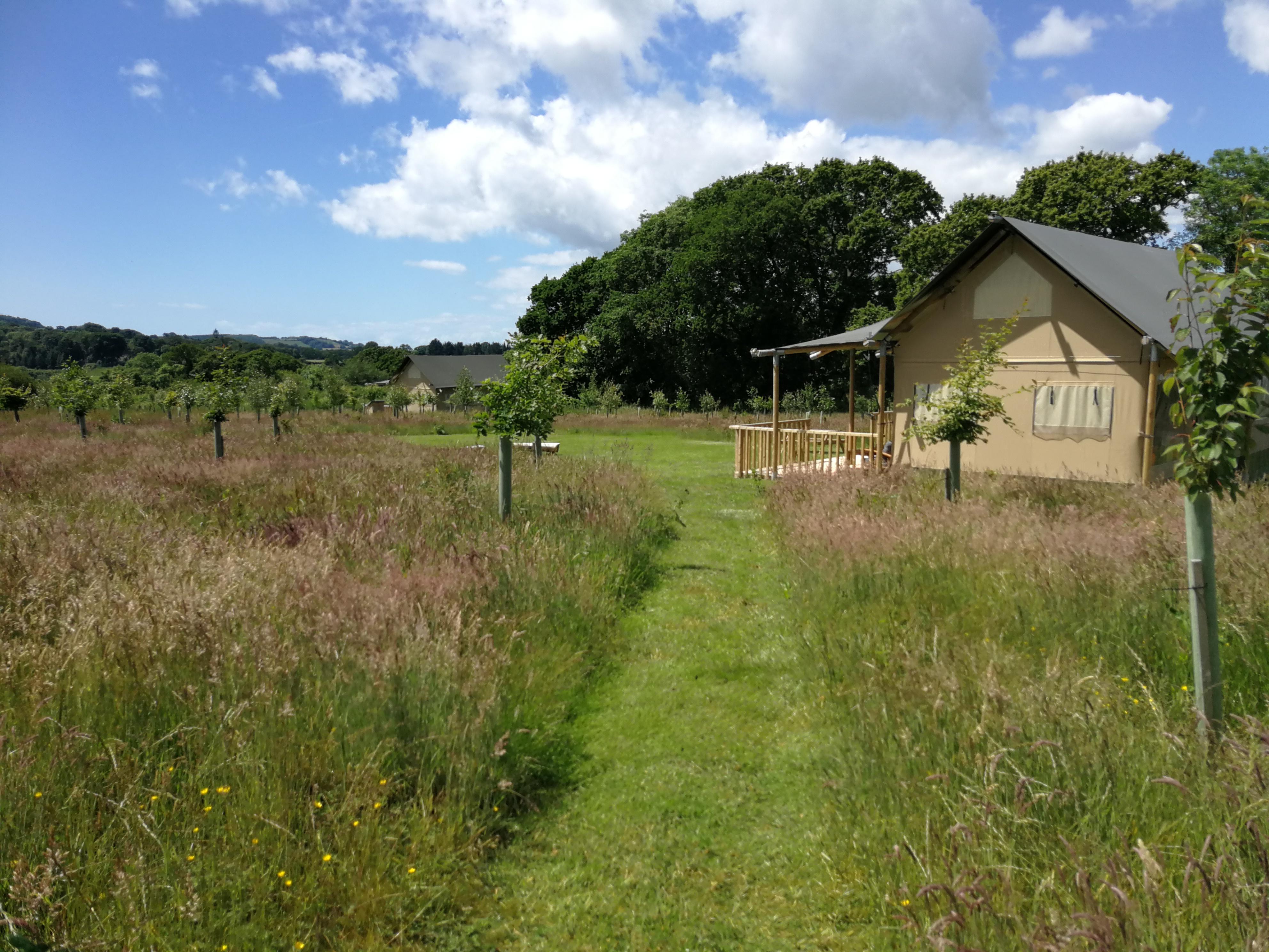Path leading to Oak