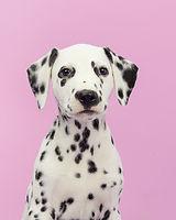 犬の肖像画