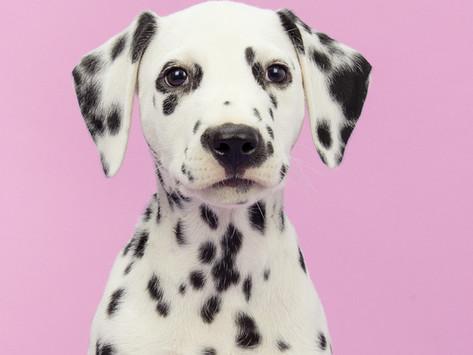 Aromaterapie a její účinky na psa