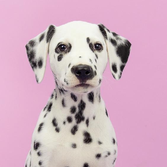 Fundraising Dog Show for the Malibu Triathlon