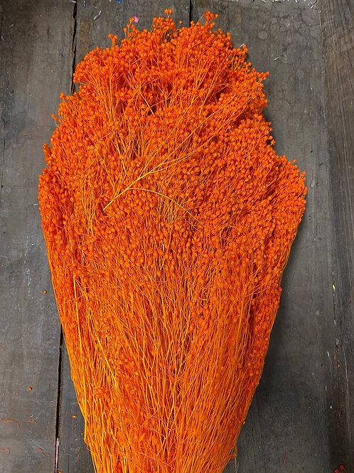 ARCHIVES - Broom bloom