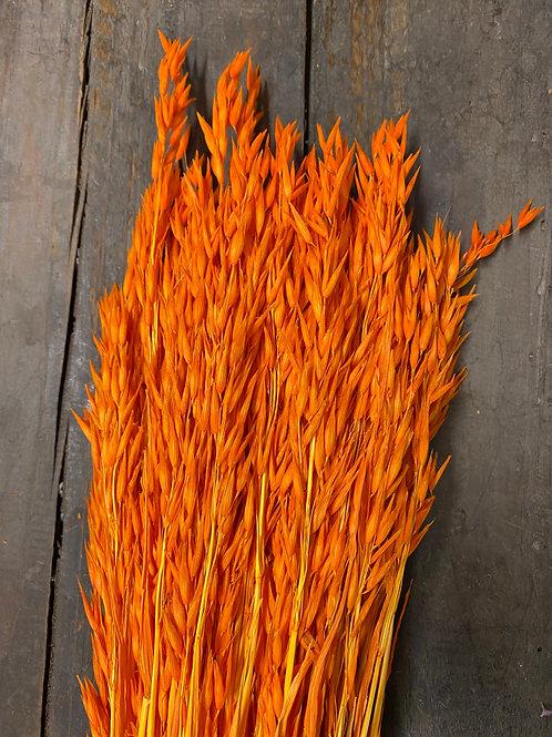 VILLETTE - Blé orange