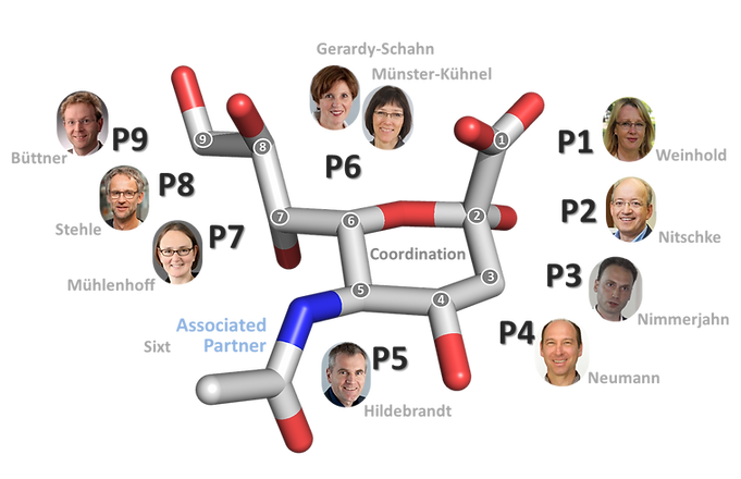 Structure of Sialic Acid with Principal Investigators. Image: Martina Mühlenhoff