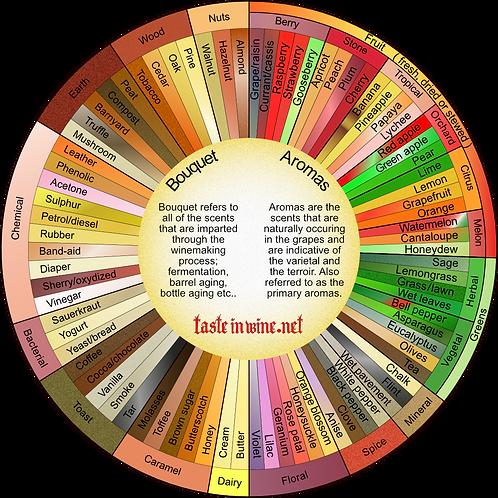 The Aroma vs. Bouquet Wine Tasting Wheel