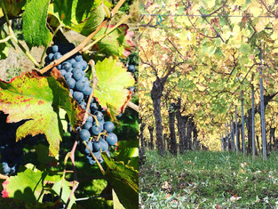 Terroir Change & The New Bordeaux