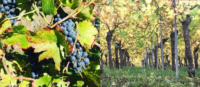 Terroir Change & The New Bordeaux