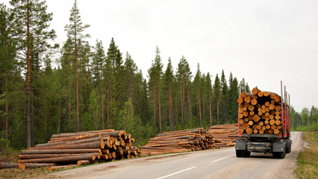 Labor cuts down timber workers under new laws