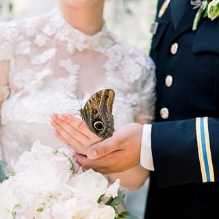 bride and groom hold butterfly