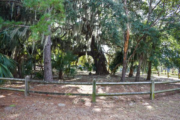 backside of the live oak at jarvis creek