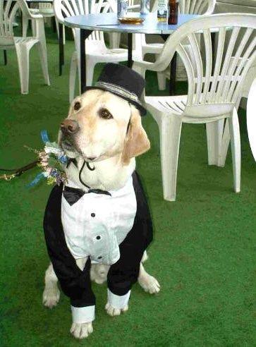 dog tuxedo at wedding