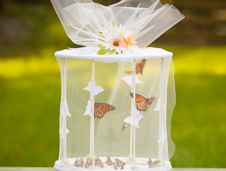 Wedding Ceremony Butterfly Release