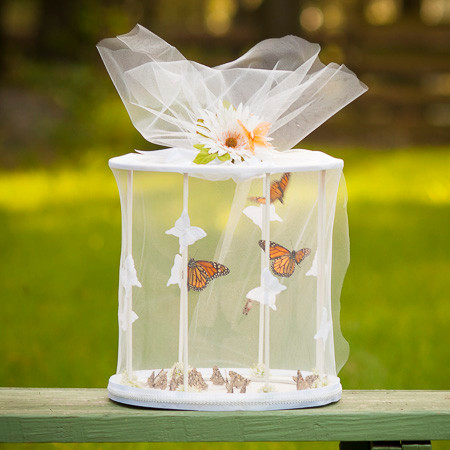 butterfly ceremony as part of a wedding