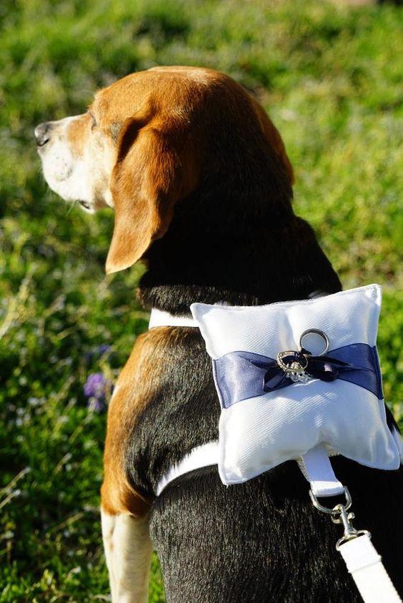 dog as ring bearer in wedding