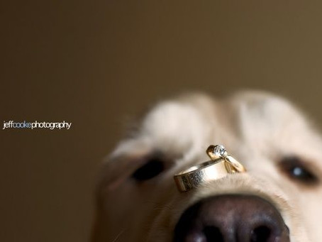 Your Wedding plus Your Dog!!