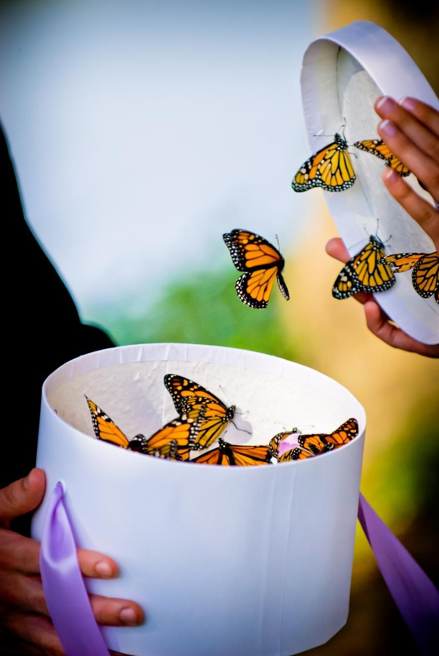 butterfly release wedding ceremony