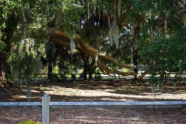 elopement tree in hilton head island sc