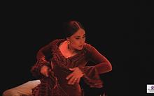 flamenco9.png