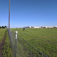 Spacious pastures