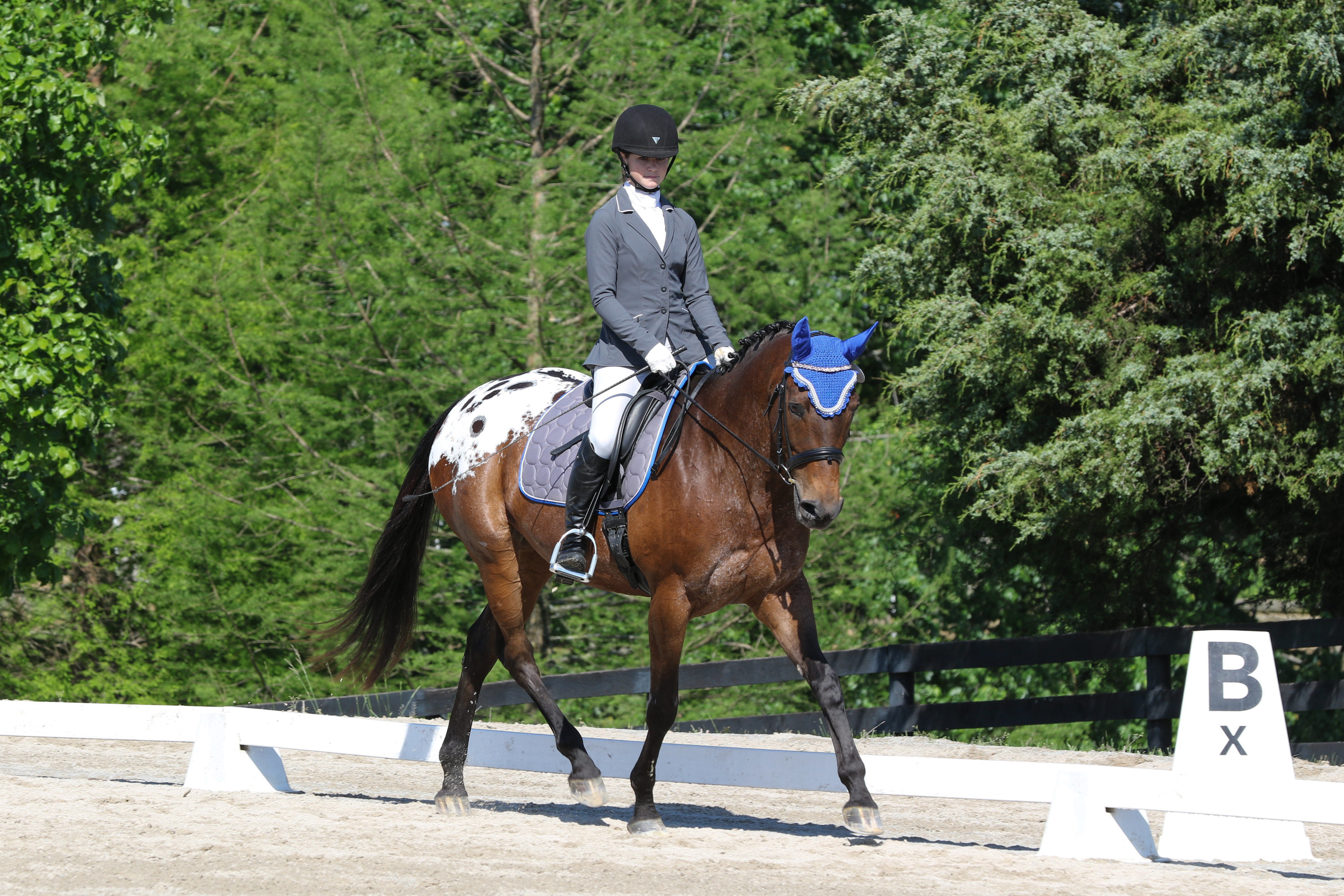 Dream Trot Dressage