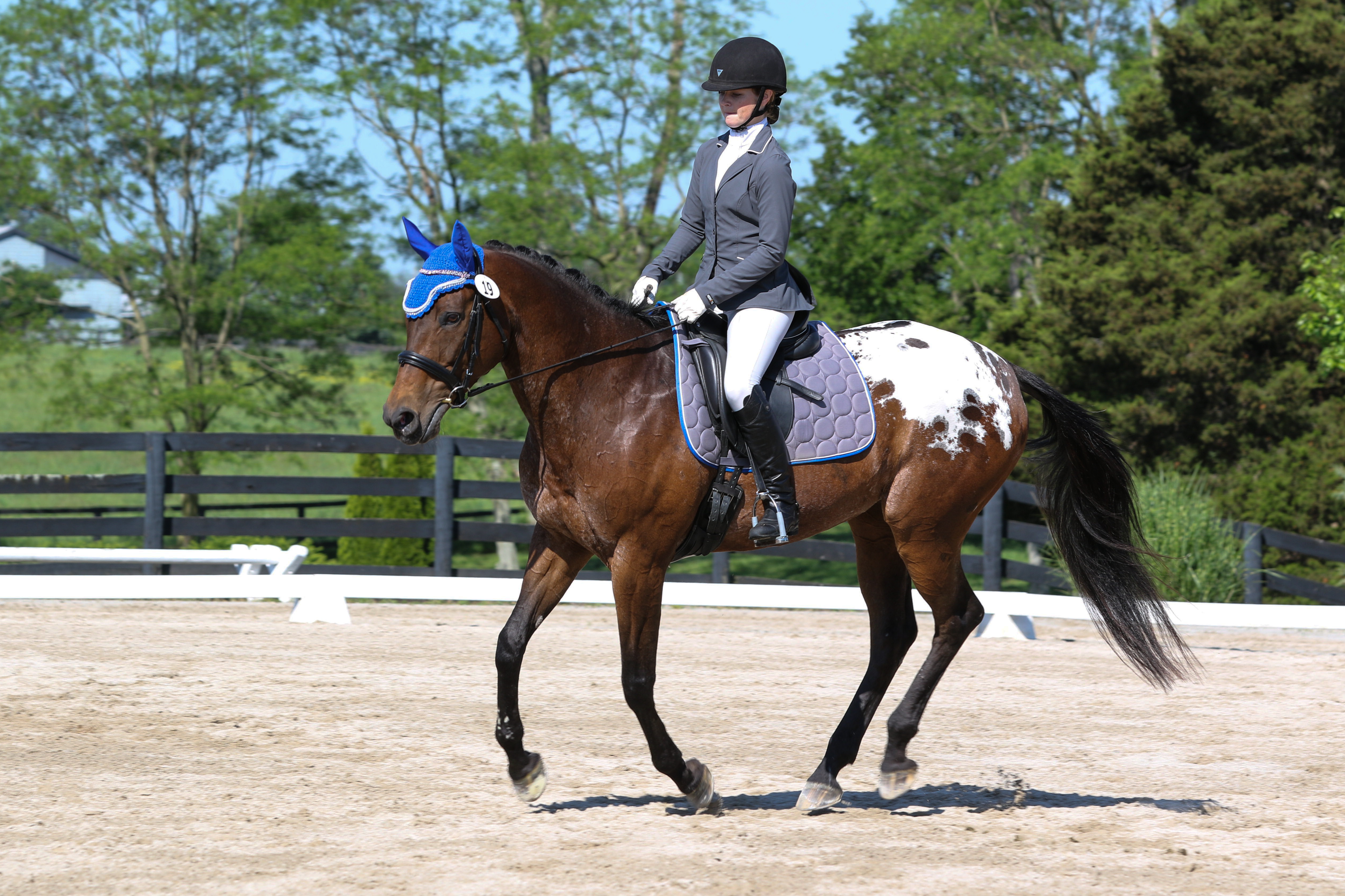 Dream Canter Dressage