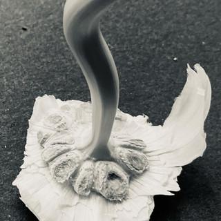 Olivia Evola