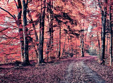 Bavarian Autumn Art