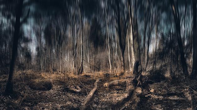 Magic Forest I