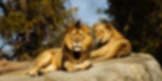 Monarto Zoo 1.jpg