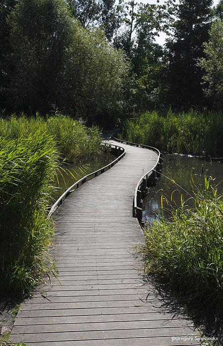 Chemin vers le lac