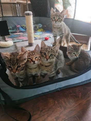 Gibbston Valley kittens