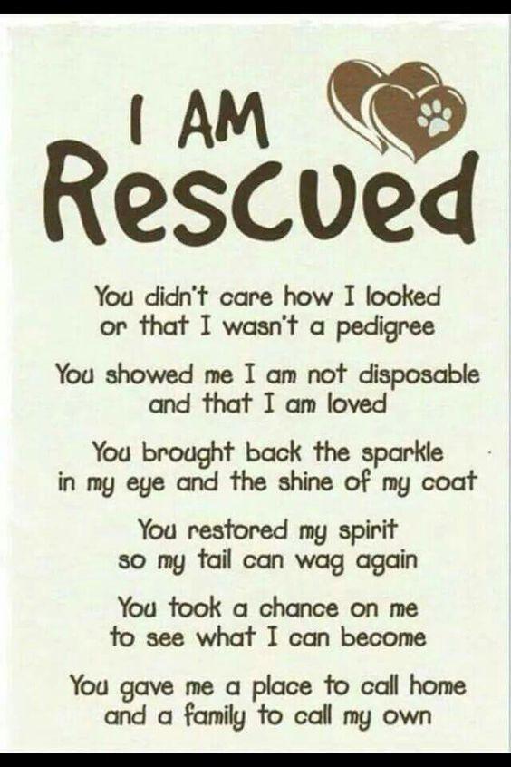 rescue8.jpeg