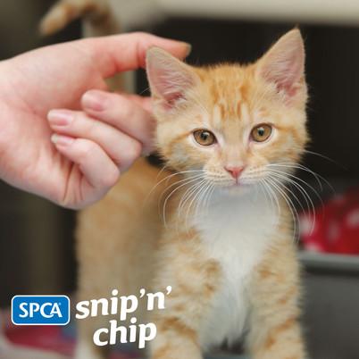 Snip n Chip
