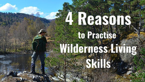 4 Reasons to Go Wild This Year (2020)