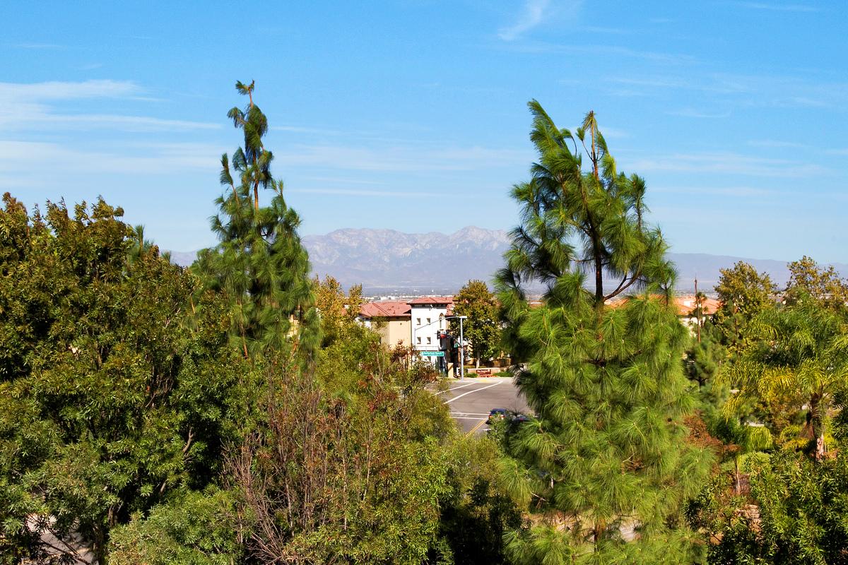 16543 Sagebrush St. Chino Hills, Ca