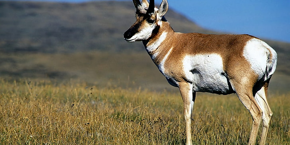 Montana Antelope Hunt