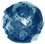Camas_2_Cyanotype_on_Paper_7x7_Laurey_Be