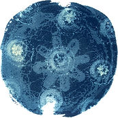 Camas_3_Cyanotype_on_Paper_7x7_Laurey_Be