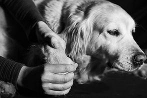 ostéopathe canin douleur dos articulation