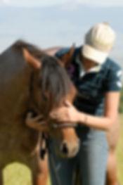 équitation éthologique éducation cheval stage cours licol cordelette liberté