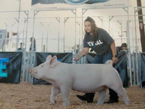Emily Duval, Golden Valley FFA