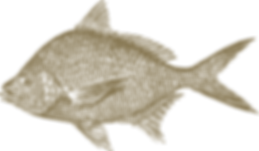 Design | Pesce fresco Orata