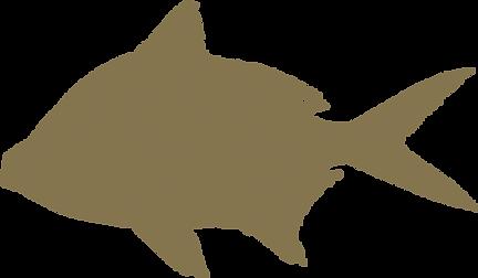 Design   Pesce fresco Orata