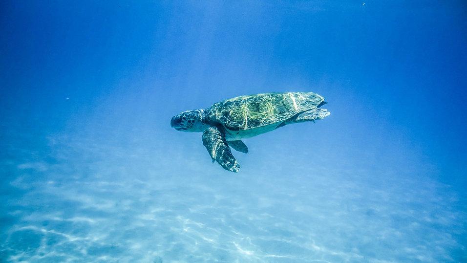 turtle-1890662_1920.jpg