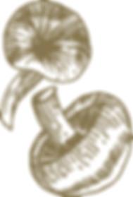 Design | Funghi