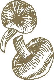 Design   Funghi